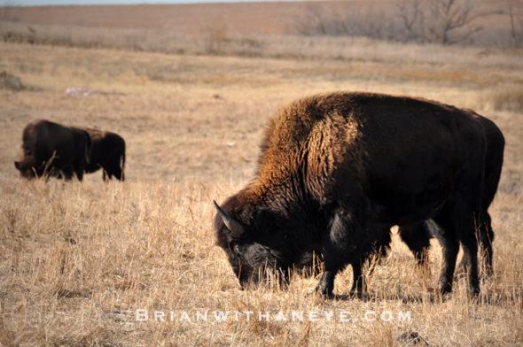 ks_buffalomrk